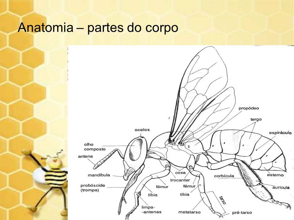 Anatomia – partes do corpo