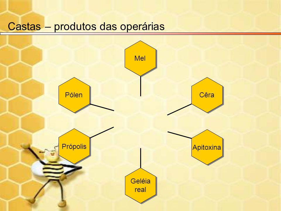 Castas – produtos das operárias Mel Cêra Apitoxina Geléia real Geléia real Própolis Pólen