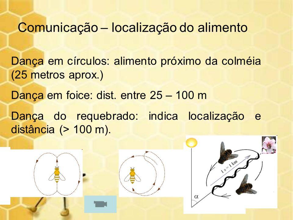 Comunicação – localização do alimento Dança em círculos: alimento próximo da colméia (25 metros aprox.) Dança em foice: dist. entre 25 – 100 m Dança d