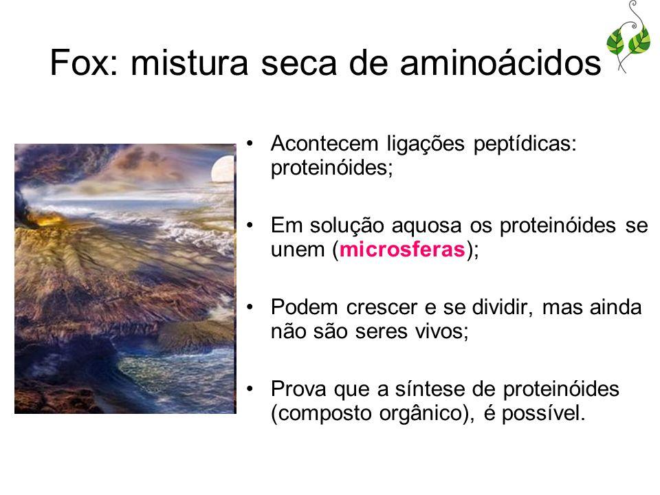 Fox: mistura seca de aminoácidos Acontecem ligações peptídicas: proteinóides; Em solução aquosa os proteinóides se unem (microsferas); Podem crescer e