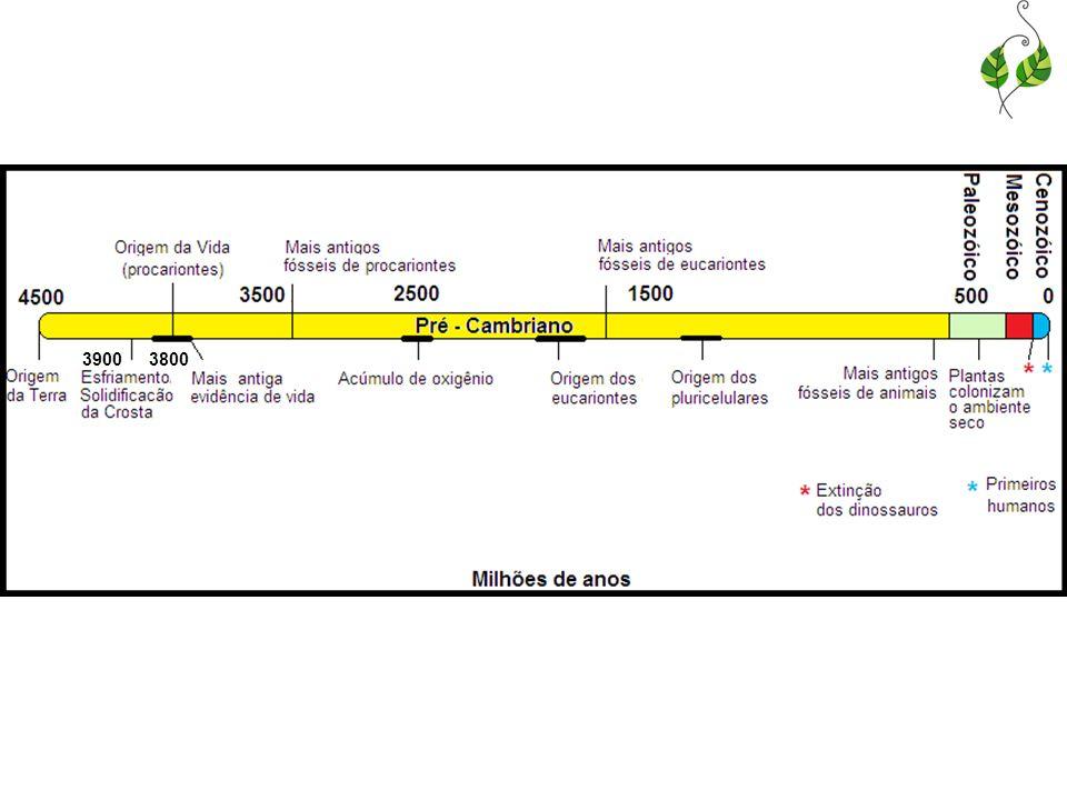 Teorias recentes Atmosfera primitiva: acredita-se que não existia amônia ou metano, apenas gás carbônico, nitrogênio, hidrogênio e vapor de água; Novos estudos como o de Miller, confirmaram que é possível obter moléculas orgânicas mesmo com outra combinação de gases.
