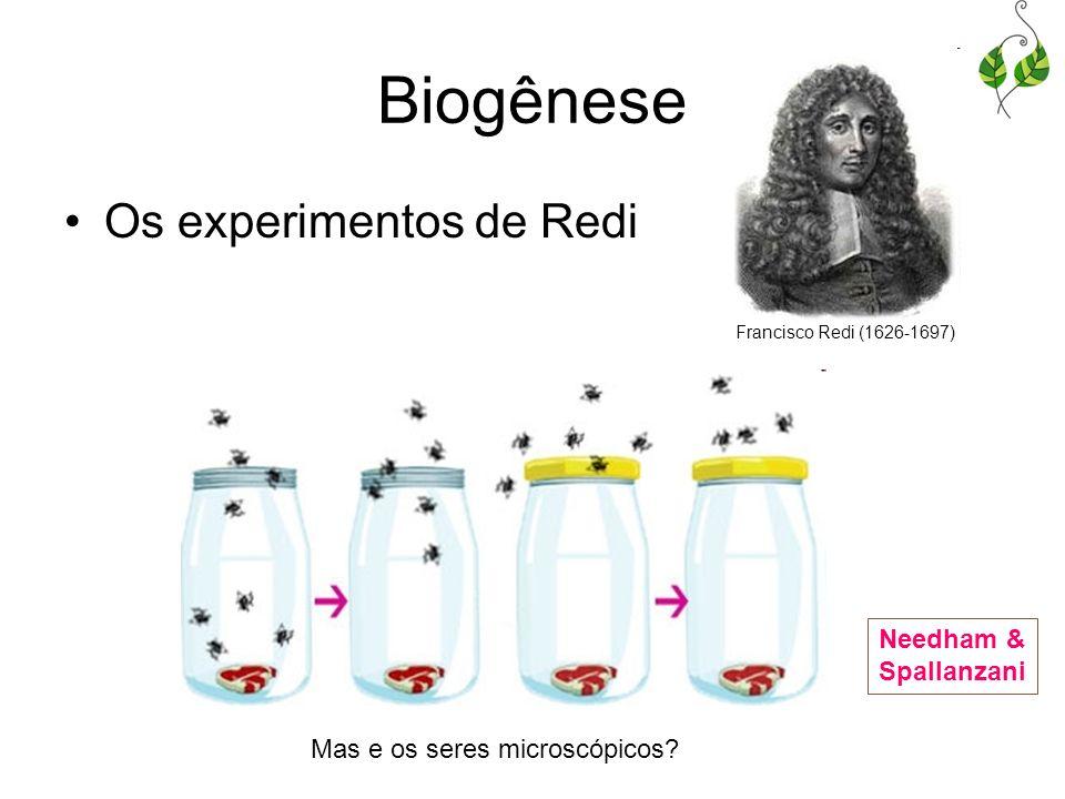 Biogênese Os experimentos de Redi Francisco Redi (1626-1697) Mas e os seres microscópicos? Needham & Spallanzani