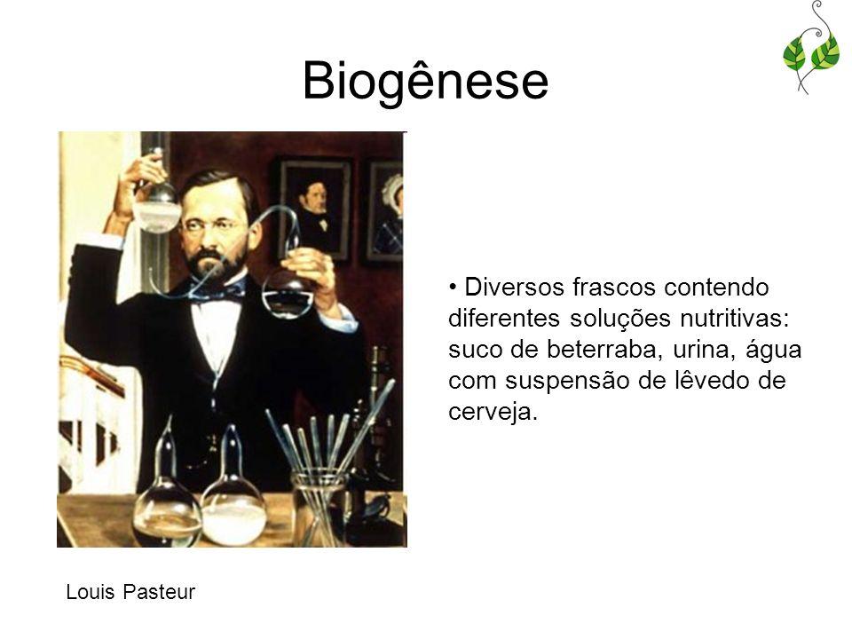 Biogênese Diversos frascos contendo diferentes soluções nutritivas: suco de beterraba, urina, água com suspensão de lêvedo de cerveja. Louis Pasteur