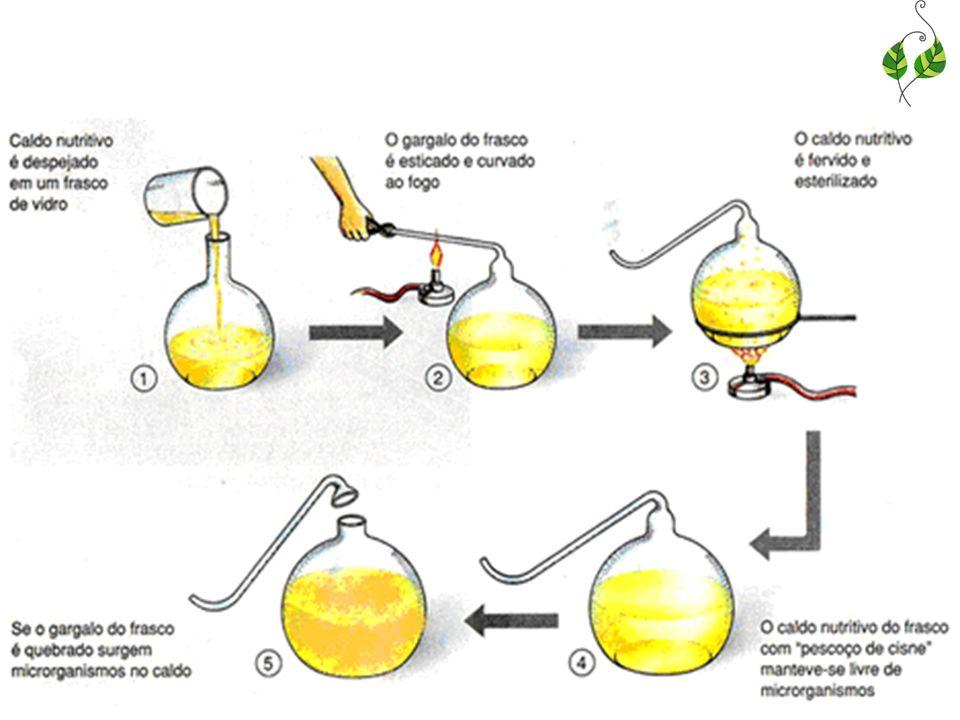 Hipótese autotrófica: propõe que o primeiro ser vivo foi capaz de sintetizar seu próprio alimento orgânico Hipótese heterotrófica: prevê que os primeiros organismos se nutriam de material orgânico já pronto, que retiravam de seu meio.