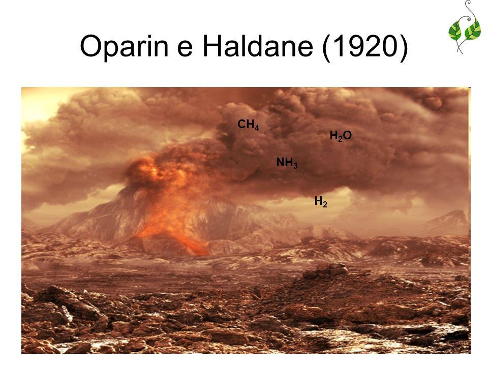 Oparin e Haldane (1920) CH 4 H2OH2O NH 3 H2H2