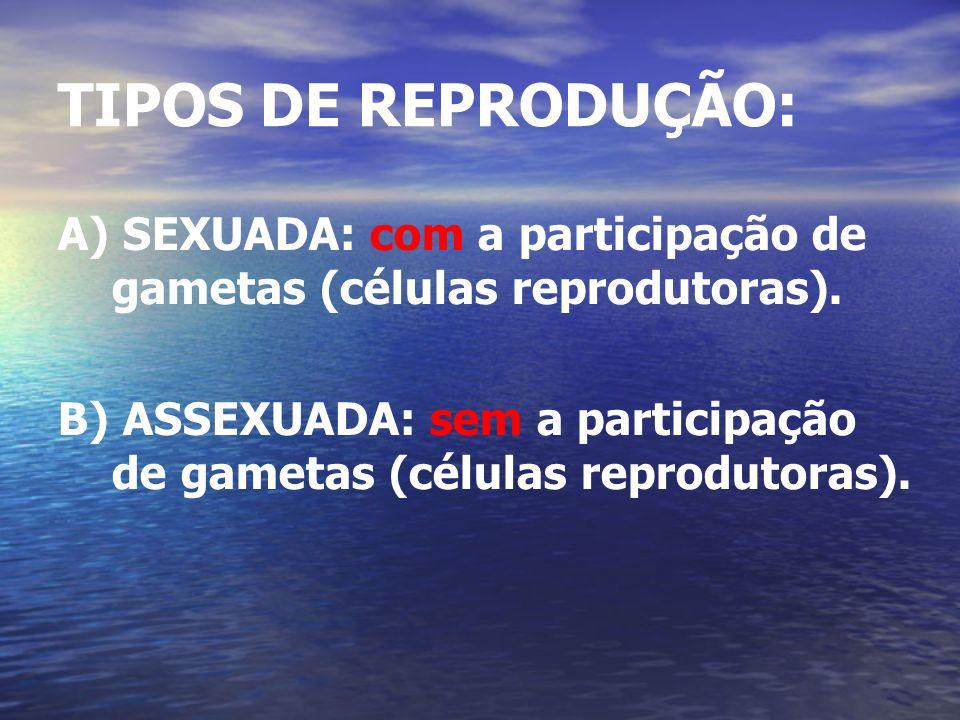 TIPOS DE REPRODUÇÃO: A) SEXUADA: com a participação de gametas (células reprodutoras). B) ASSEXUADA: sem a participação de gametas (células reprodutor