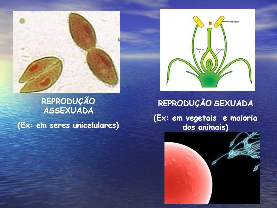 REPRODUÇÃO ASSEXUADA (Ex: em seres unicelulares) REPRODUÇÃO SEXUADA (Ex: em vegetais e maioria dos animais)