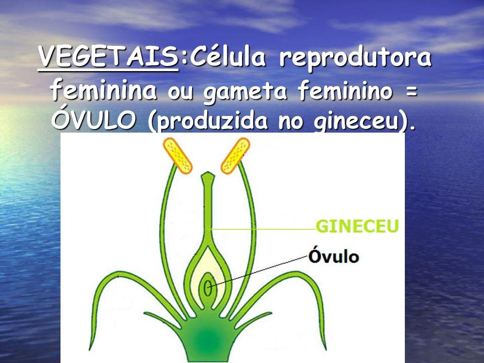 VEGETAIS:Célula reprodutora feminina ou gameta feminino = ÓVULO (produzida no gineceu).