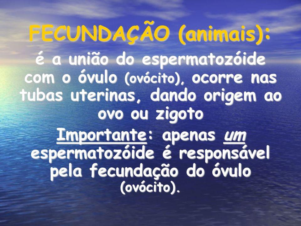 FECUNDAÇÃO (animais) : é a união do espermatozóide com o óvulo (ovócito), ocorre nas tubas uterinas, dando origem ao ovo ou zigoto Importante: apenas