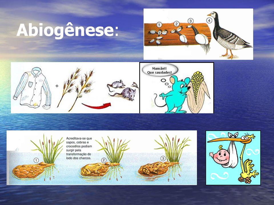 FECUNDAÇÃO (animais) : é a união do espermatozóide com o óvulo (ovócito), ocorre nas tubas uterinas, dando origem ao ovo ou zigoto Importante: apenas um espermatozóide é responsável pela fecundação do óvulo (ovócito).