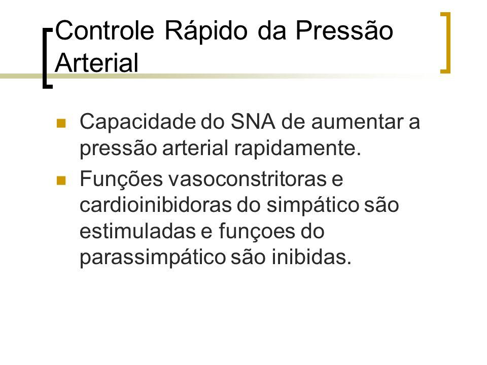 Controle Rápido da Pressão Arterial Capacidade do SNA de aumentar a pressão arterial rapidamente. Funções vasoconstritoras e cardioinibidoras do simpá
