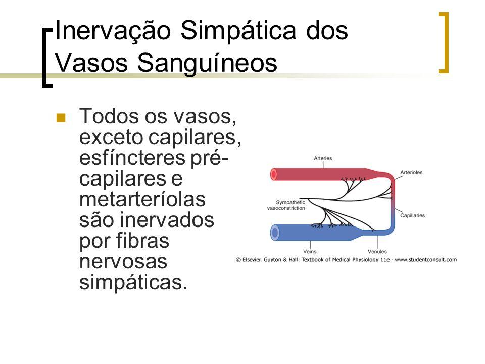 Inervação Simpática dos Vasos Sanguíneos Todos os vasos, exceto capilares, esfíncteres pré- capilares e metarteríolas são inervados por fibras nervosa
