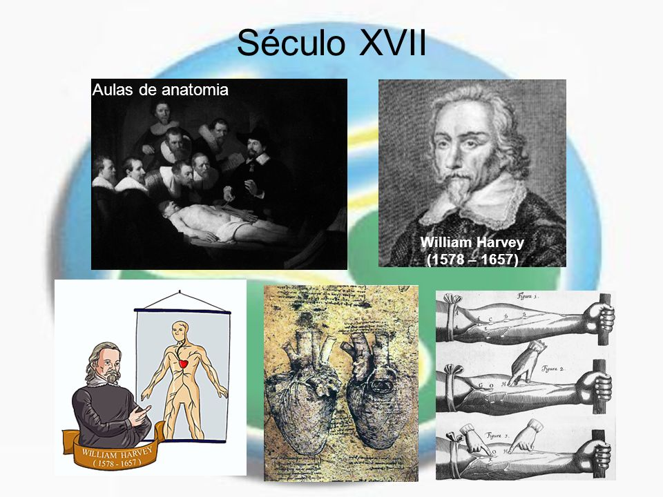 Século XVII Aulas de anatomia William Harvey (1578 – 1657)