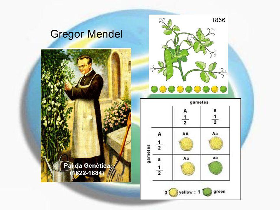 Gregor Mendel Pai da Genética (1822-1884) 1866