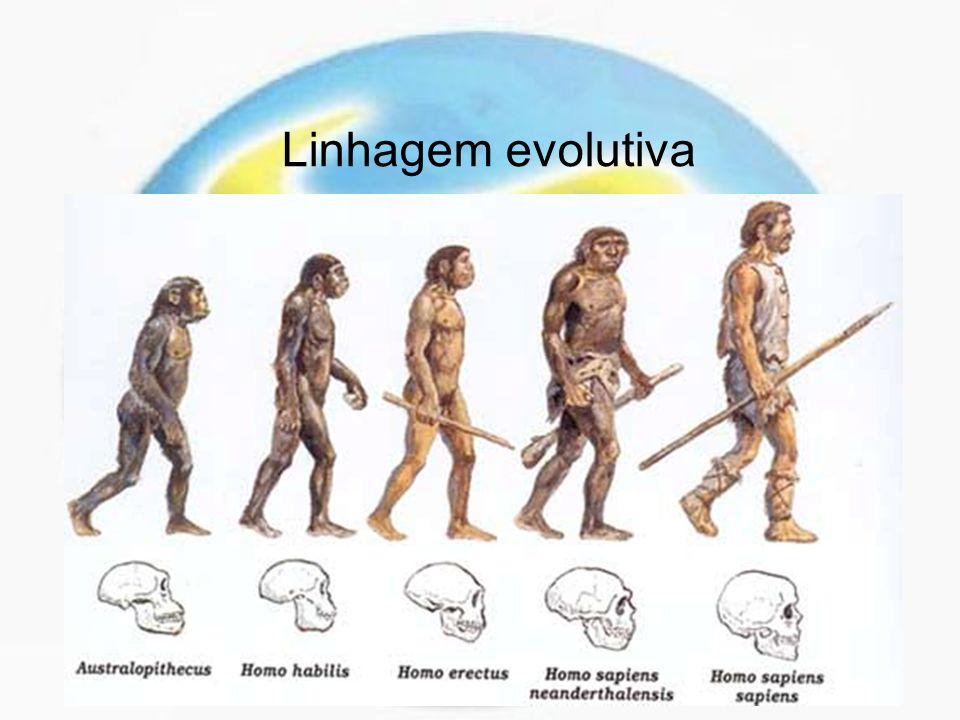 Linhagem evolutiva