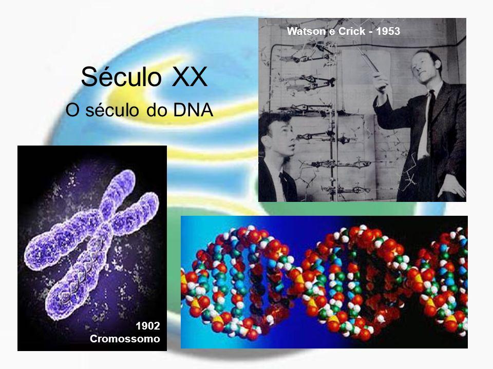 Século XX O século do DNA 1902 Cromossomo Watson e Crick - 1953