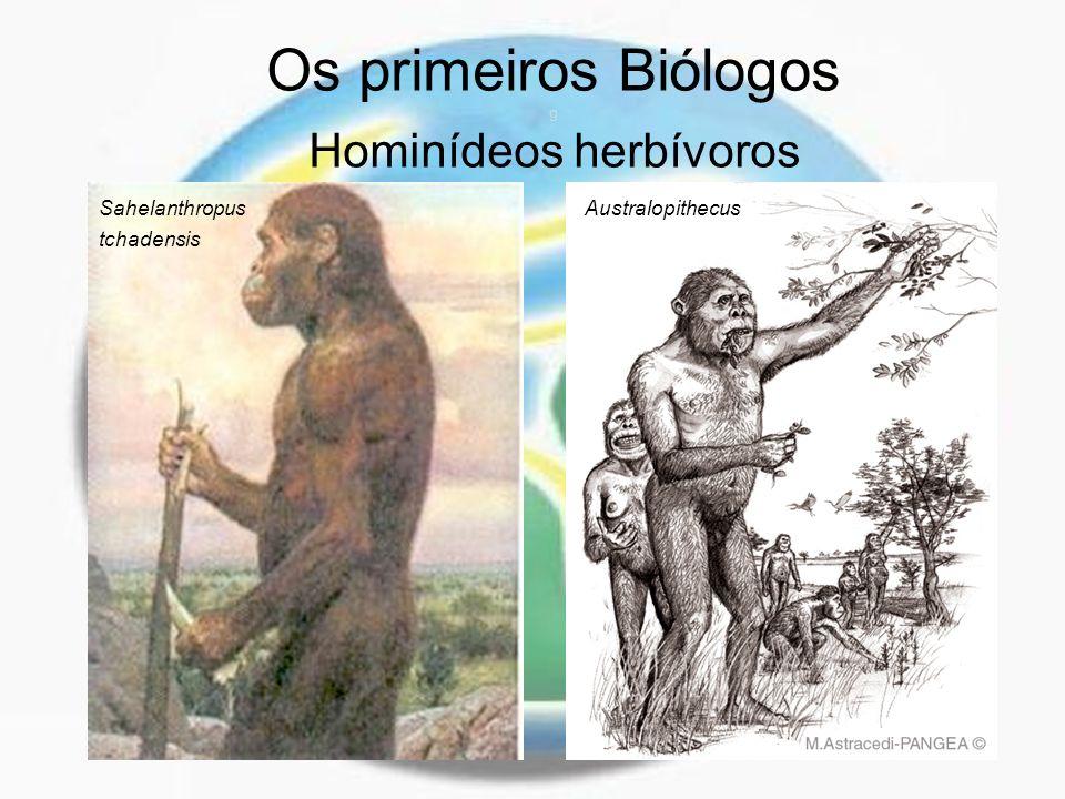 Os primeiros Biólogos g Hominídeos herbívoros AustralopithecusSahelanthropus tchadensis