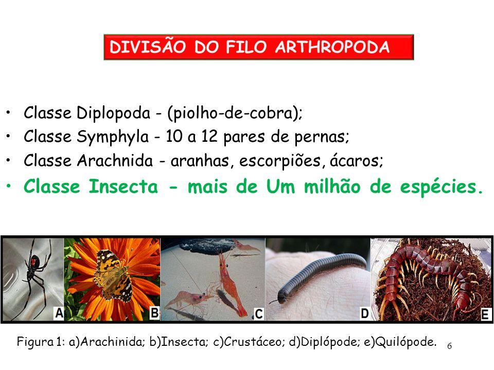 Classe Diplopoda - (piolho-de-cobra); Classe Symphyla - 10 a 12 pares de pernas; Classe Arachnida - aranhas, escorpiões, ácaros; Classe Insecta - mais