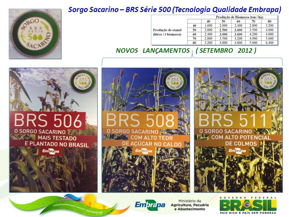 Sorgo Sacarino – BRS Série 500 (Tecnologia Qualidade Embrapa) NOVOS LANÇAMENTOS ( SETEMBRO 2012 )