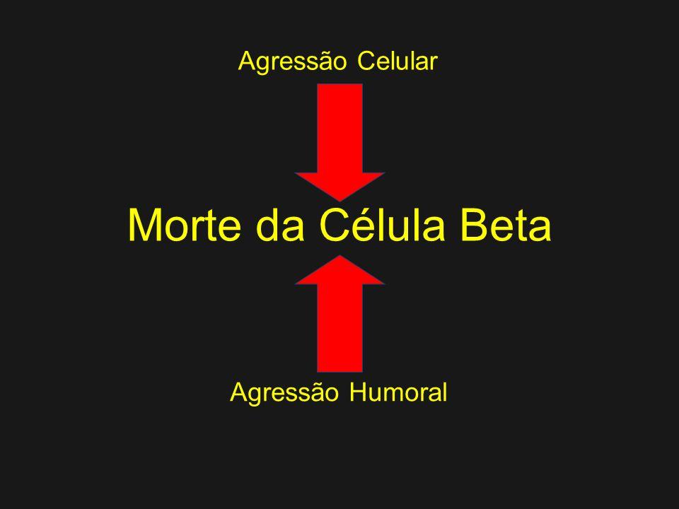 A Morte da Célula Beta Diabetes Mellitus Imunológico, um final já esperado? Componentes celulares e humorais (anticorpos) são detectados meses ou mesm