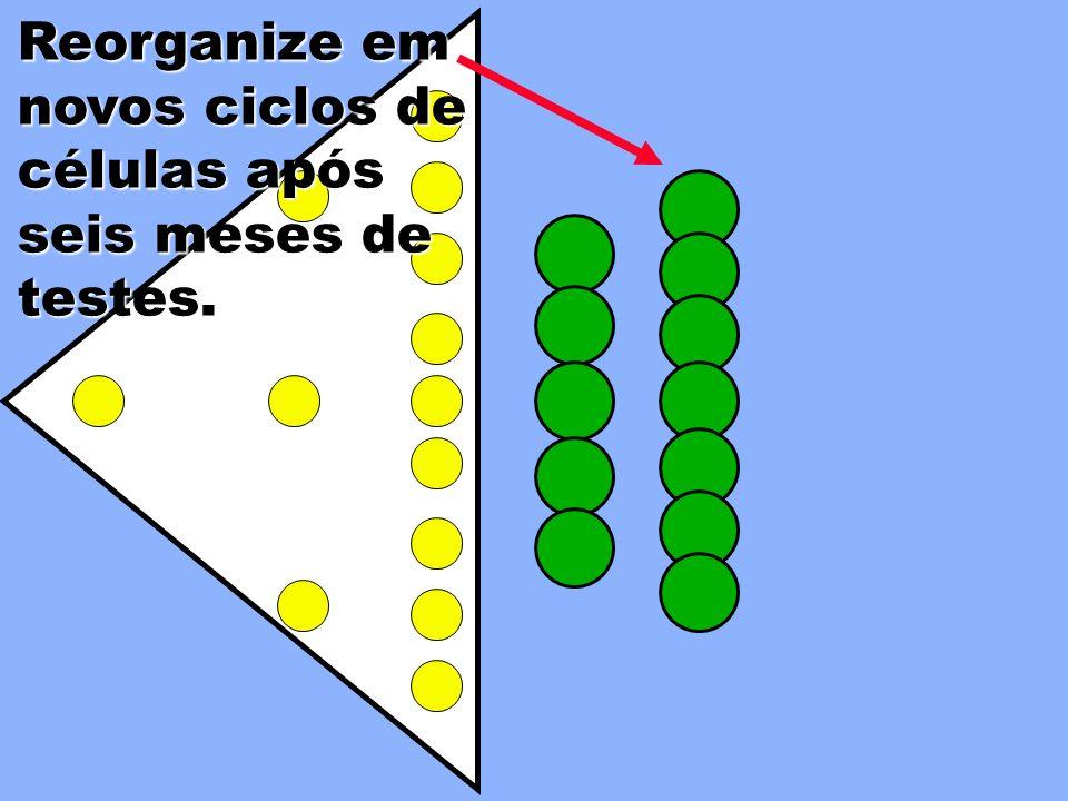 Forme 5 células para teste a partir dos membros de Pedro, Tiago & João mais os novos integrantes. Apresente os componentes. Reorganize após 6 meses 3º