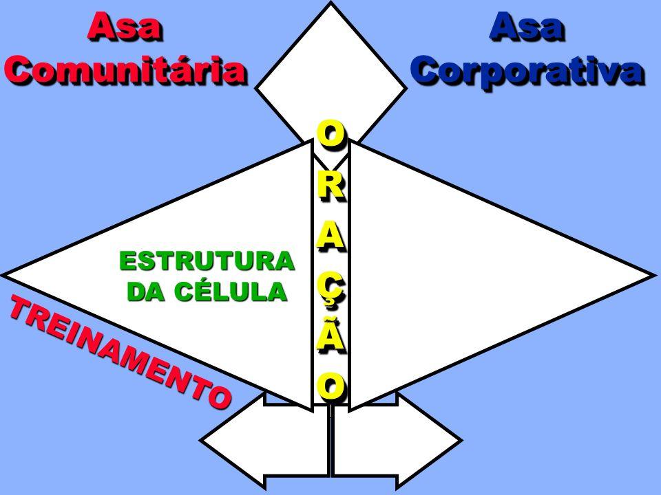 O OBJETIVO É DESENVOLVER 12-20 CÉLULAS SADIAS. Reorganiza em novos ciclos de células após seis meses de testes.