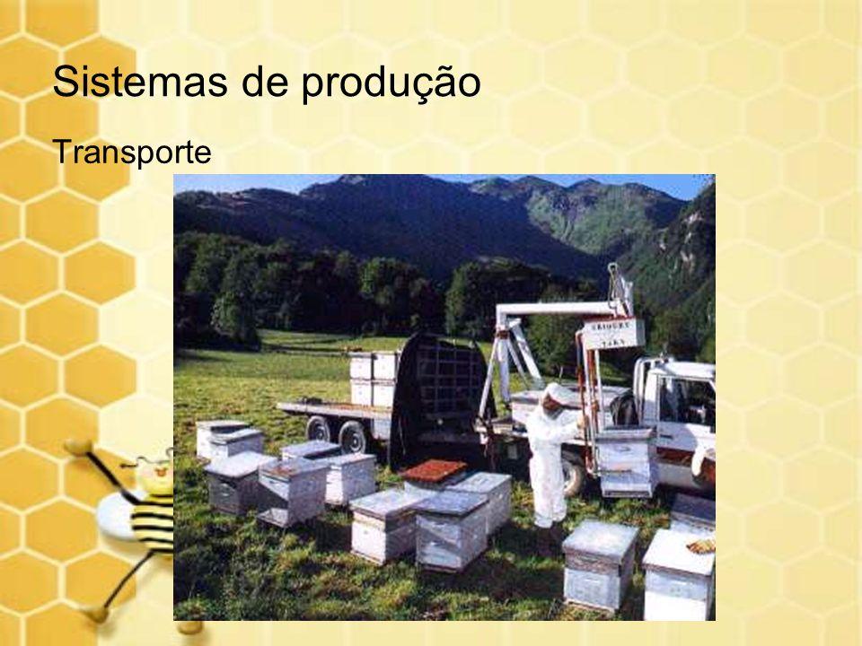 Sistemas de produção Etapas: Treinamento da mão-de-obra Avaliação dos locais com potencial apícola para mapeamento dos deslocamentos.
