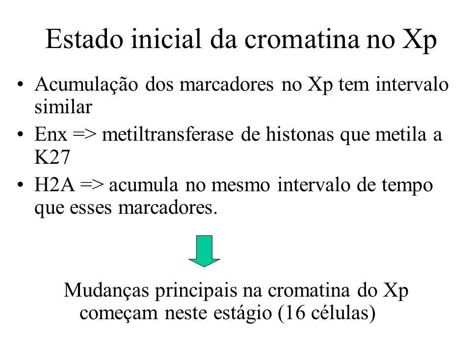 Acumulação dos marcadores no Xp tem intervalo similar Enx => metiltransferase de histonas que metila a K27 H2A => acumula no mesmo intervalo de tempo