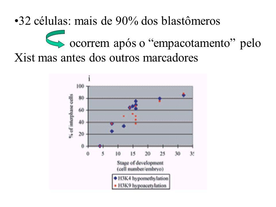 32 células: mais de 90% dos blastômeros ocorrem após o empacotamento pelo Xist mas antes dos outros marcadores