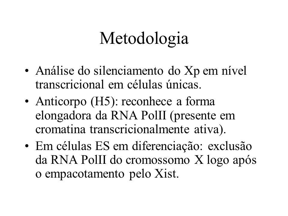 Metodologia Análise do silenciamento do Xp em nível transcricional em células únicas. Anticorpo (H5): reconhece a forma elongadora da RNA PolII (prese