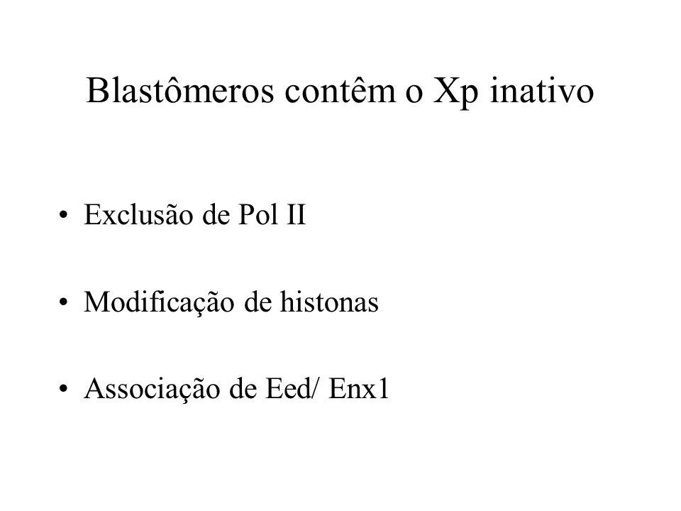 Blastômeros contêm o Xp inativo Exclusão de Pol II Modificação de histonas Associação de Eed/ Enx1