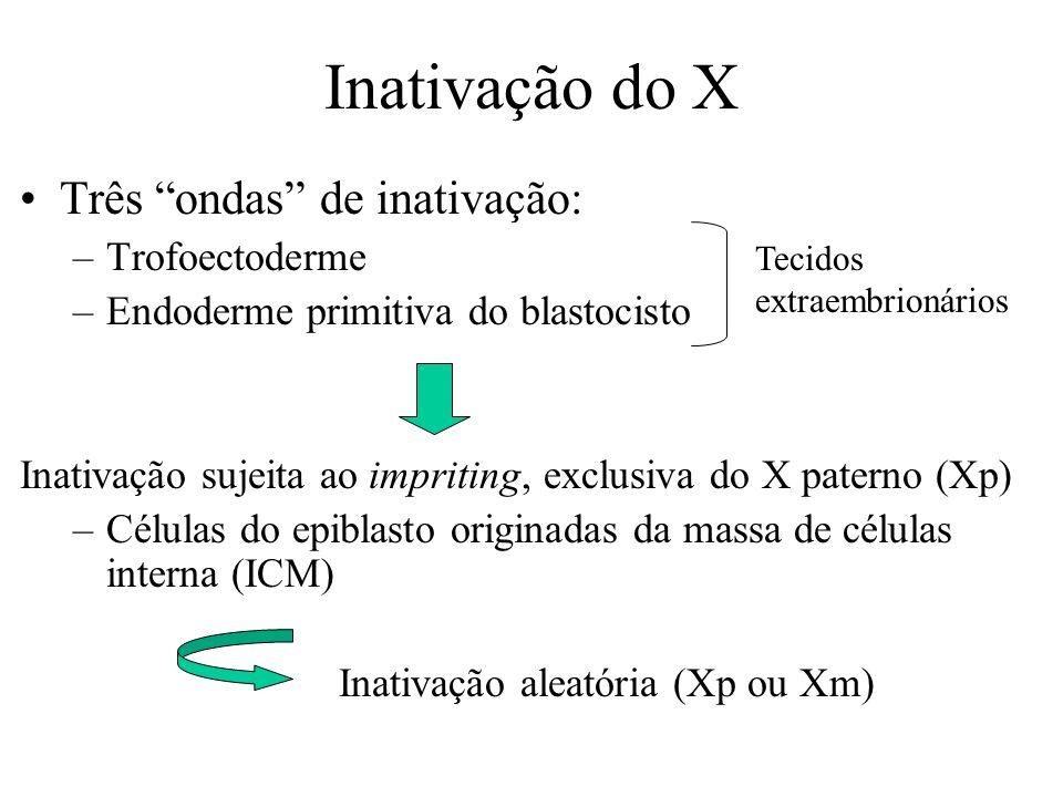 Inativação do X Três ondas de inativação: –Trofoectoderme –Endoderme primitiva do blastocisto Inativação sujeita ao impriting, exclusiva do X paterno