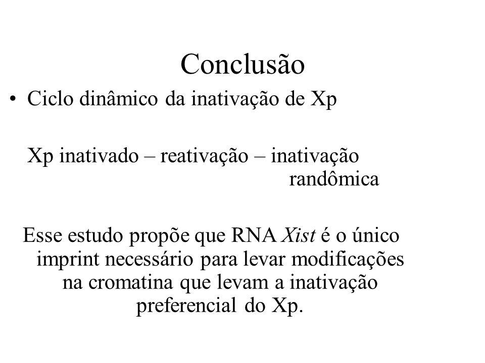 Ciclo dinâmico da inativação de Xp Xp inativado – reativação – inativação randômica Esse estudo propõe que RNA Xist é o único imprint necessário para