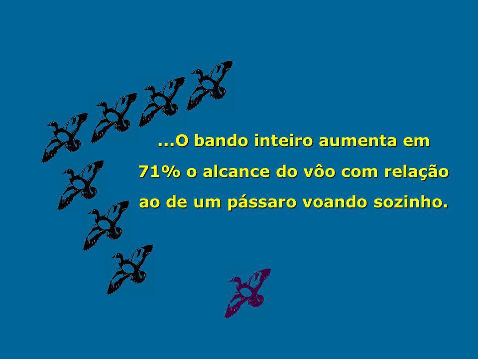 ...O bando inteiro aumenta em 71% o alcance do vôo com relação ao de um pássaro voando sozinho.