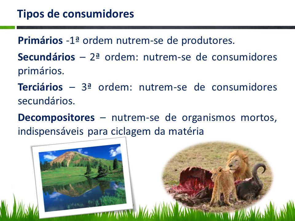 Tipos de consumidores Primários -1ª ordem nutrem-se de produtores. Secundários – 2ª ordem: nutrem-se de consumidores primários. Terciários – 3ª ordem: