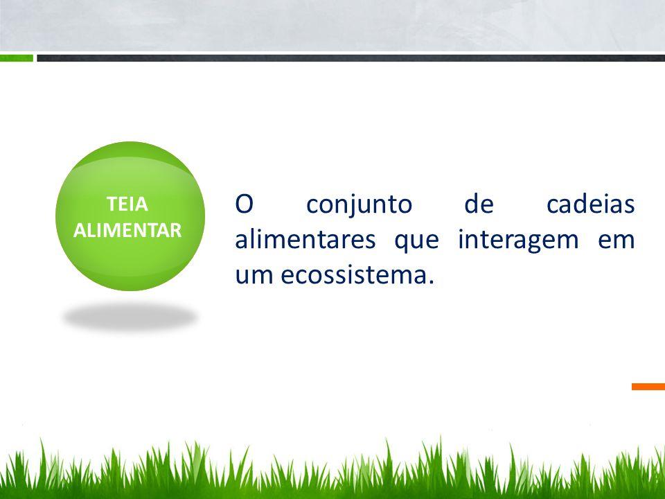 TEIA ALIMENTAR O conjunto de cadeias alimentares que interagem em um ecossistema.