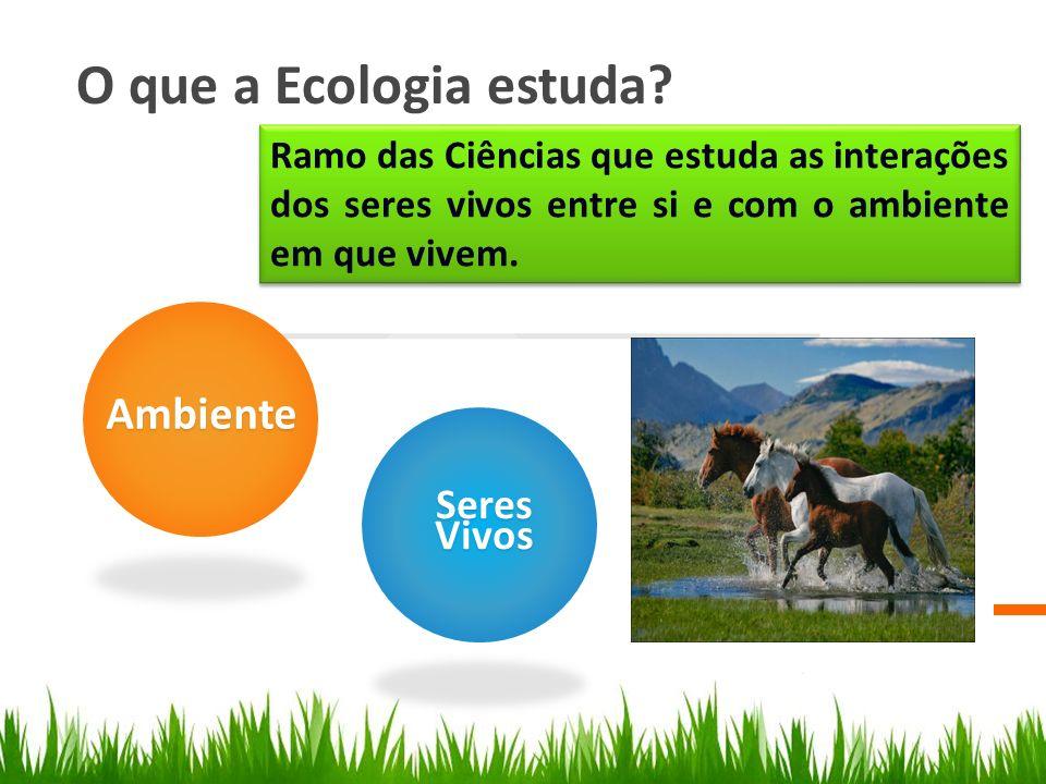 O que a Ecologia estuda? Ambiente SeresVivos Ramo das Ciências que estuda as interações dos seres vivos entre si e com o ambiente em que vivem.