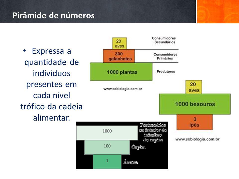 Pirâmide de números Expressa a quantidade de indivíduos presentes em cada nível trófico da cadeia alimentar.