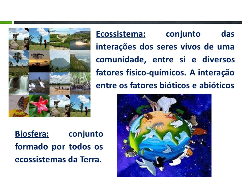 Ecossistema: conjunto das interações dos seres vivos de uma comunidade, entre si e diversos fatores físico-químicos. A interação entre os fatores biót