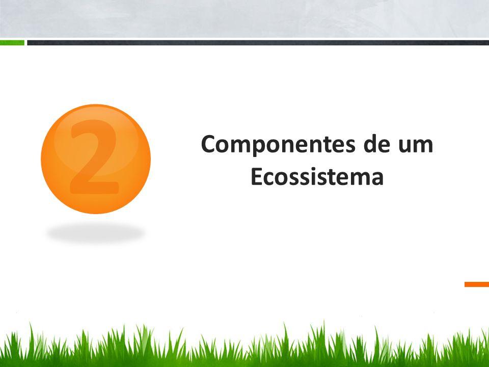 Componentes de um Ecossistema 2