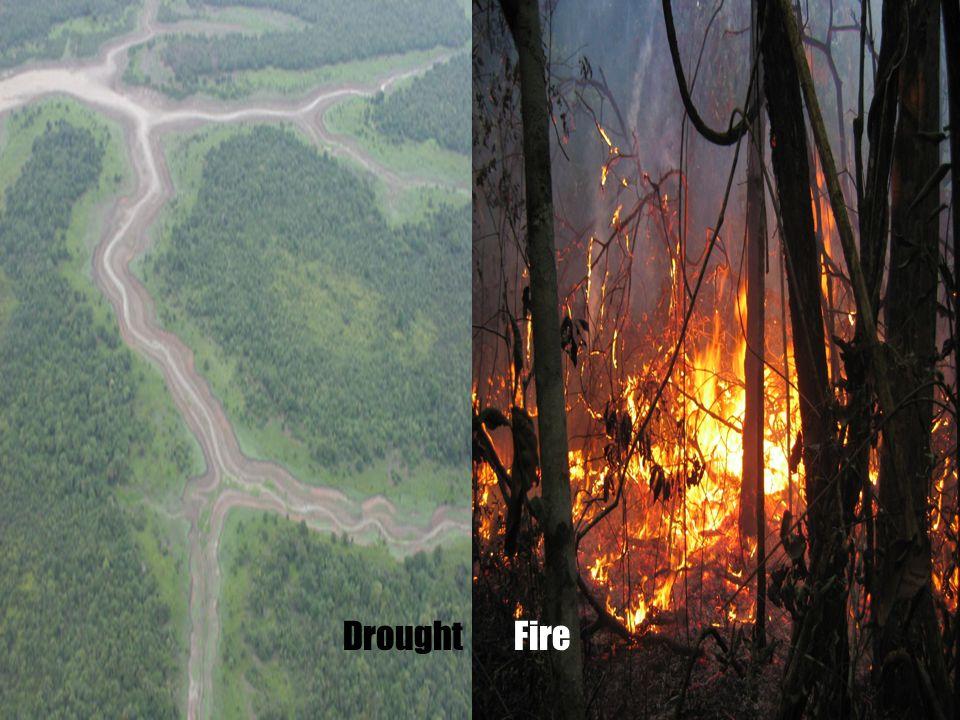 DroughtFire