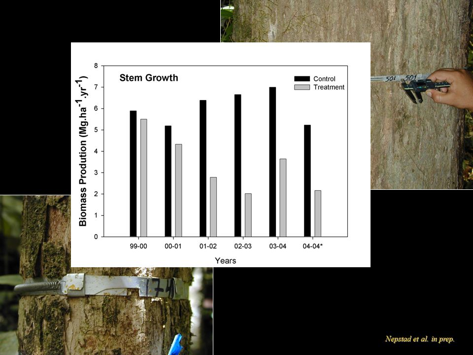Mortality Seca Floresta: 2.72% yr-1 p/ 3.77 % yr-1 (38%)