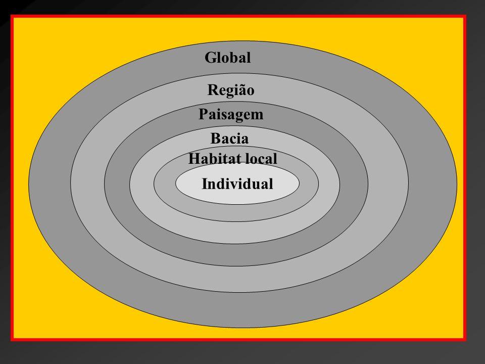 População - Competição intraespecífica - Estrutura em idade e tamanho - Taxa de crescimento - Ciclos - Distribuição espacial Indivíduo - Crescimento - Reprodução - Mortalidade - Comportamento - Movimento Comunidade - Competição inter específica - Diversidade - Estrutura espacial - Zonação - Sucessão - Invasão/extinção - Competição indireta/mutualismo Ecossistema - Biomassa - Produtividade - Fluxo de energia - Fluxo e ciclagem de nutrientes - Resiliência/estabilidade - Desenvolvimento