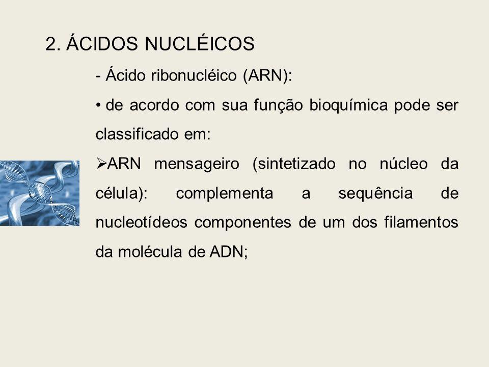 2. ÁCIDOS NUCLÉICOS - Ácido ribonucléico (ARN): de acordo com sua função bioquímica pode ser classificado em: ARN mensageiro (sintetizado no núcleo da