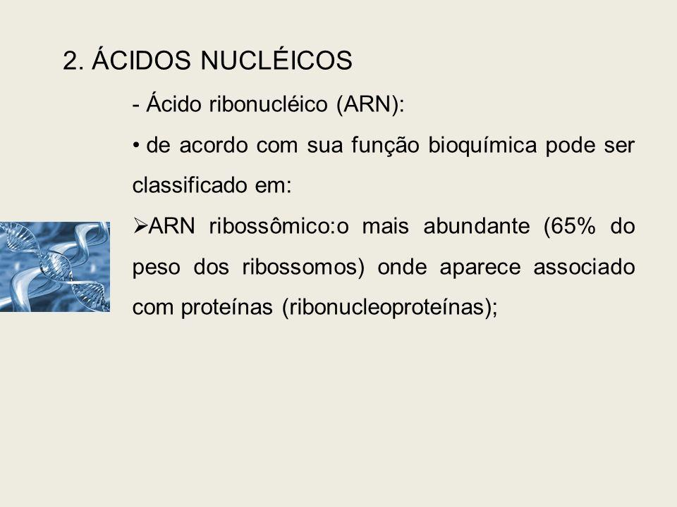 2. ÁCIDOS NUCLÉICOS - Ácido ribonucléico (ARN): de acordo com sua função bioquímica pode ser classificado em: ARN ribossômico:o mais abundante (65% do