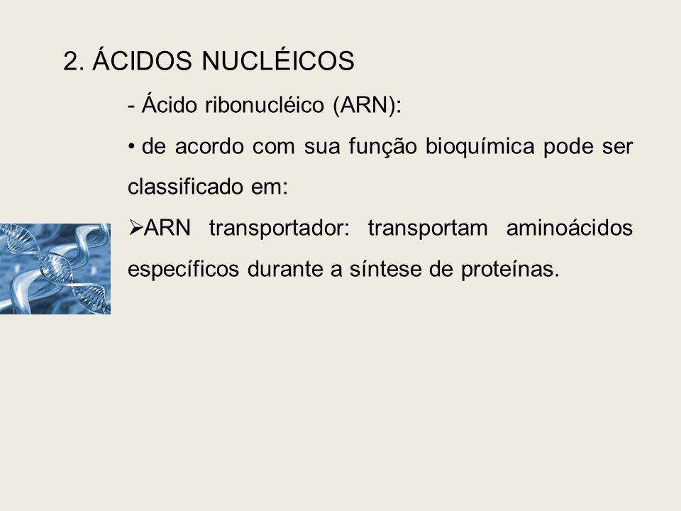 2. ÁCIDOS NUCLÉICOS - Ácido ribonucléico (ARN): de acordo com sua função bioquímica pode ser classificado em: ARN transportador: transportam aminoácid