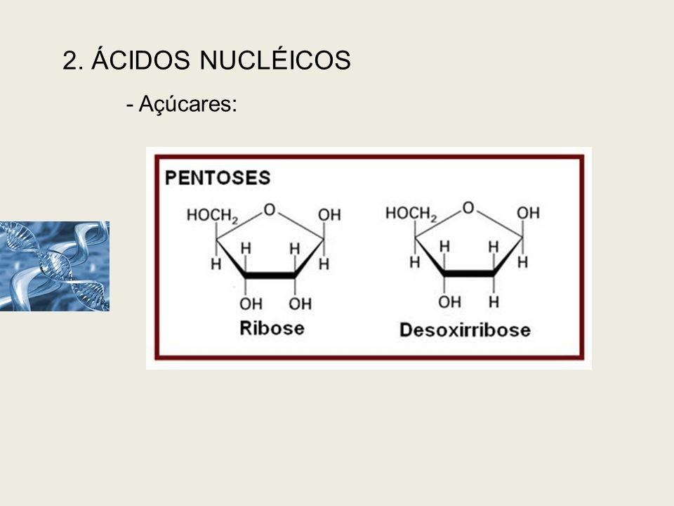 2. ÁCIDOS NUCLÉICOS - Açúcares: