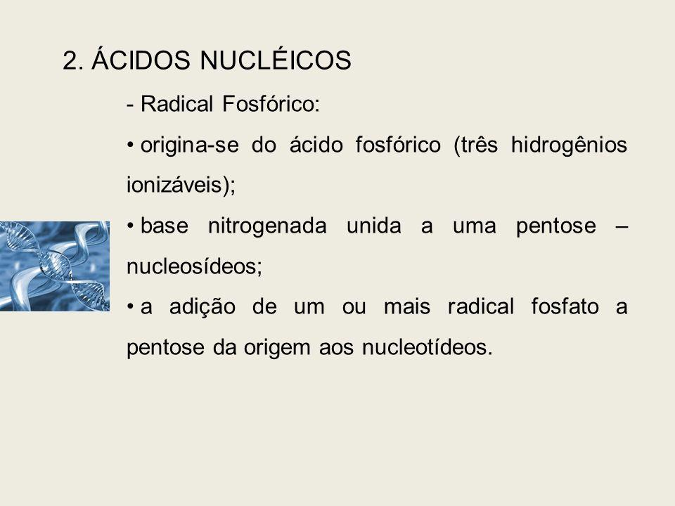 2. ÁCIDOS NUCLÉICOS - Radical Fosfórico: origina-se do ácido fosfórico (três hidrogênios ionizáveis); base nitrogenada unida a uma pentose – nucleosíd
