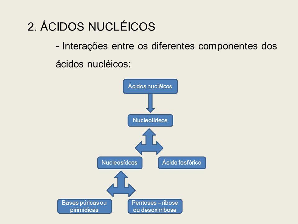 2. ÁCIDOS NUCLÉICOS - Interações entre os diferentes componentes dos ácidos nucléicos: Ácidos nucléicos Nucleotídeos NucleosídeosÁcido fosfórico Bases