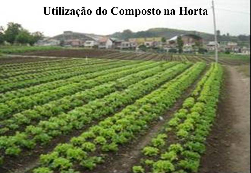 Utilização do Composto na Horta